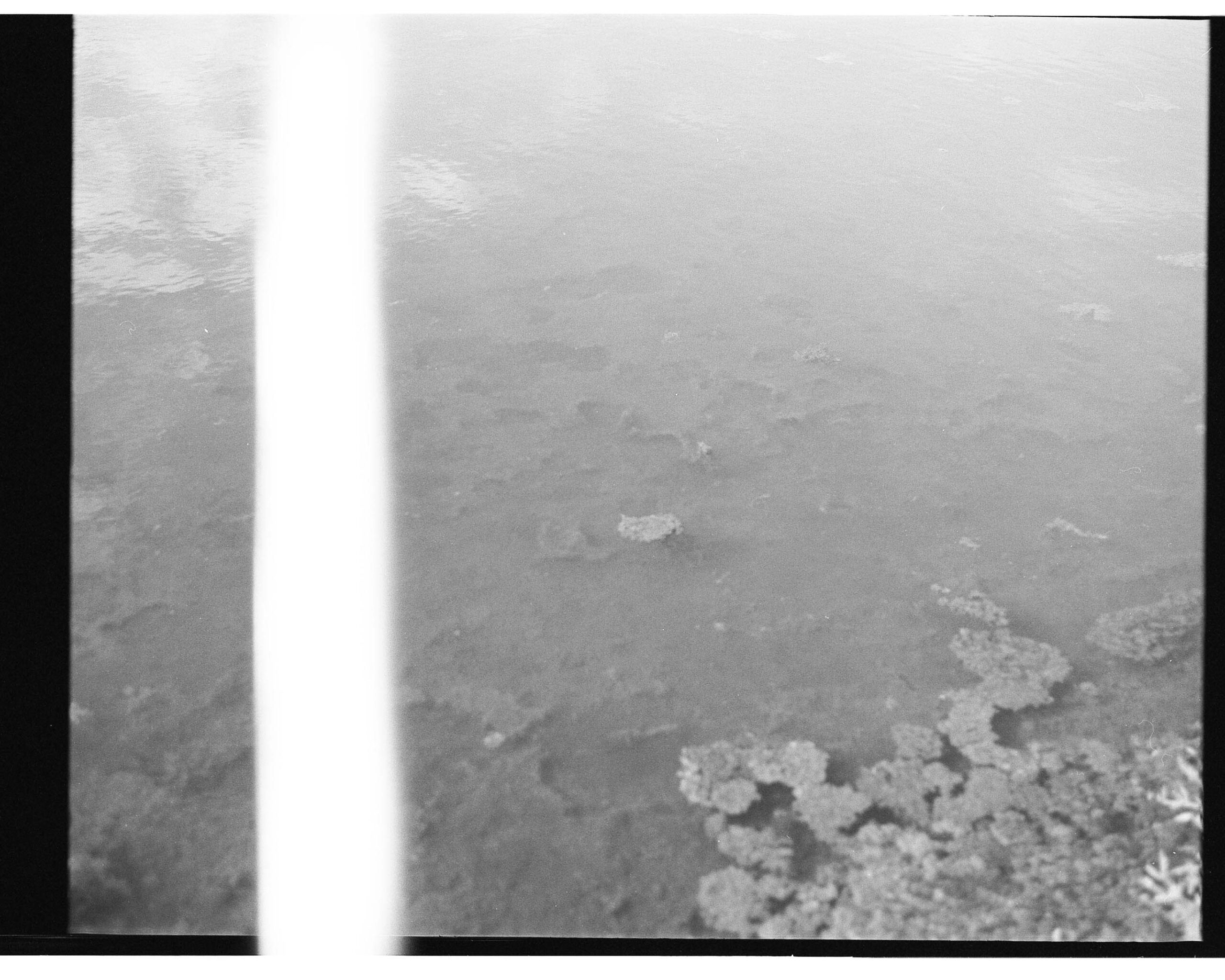 Eea, 2020 Silver gelatin print; variable dimensions - Lidia Bianchi - courtesy of the artist
